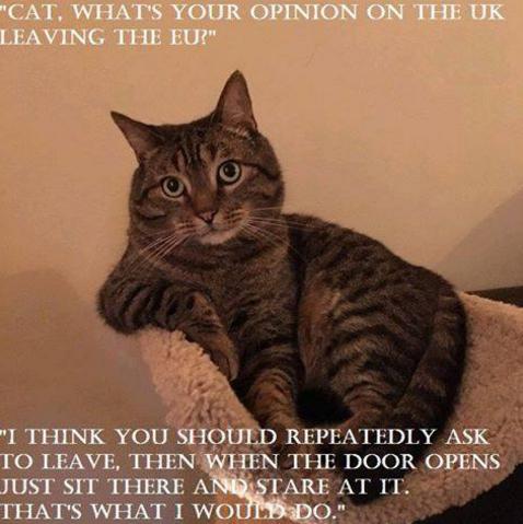 Cat Brexit